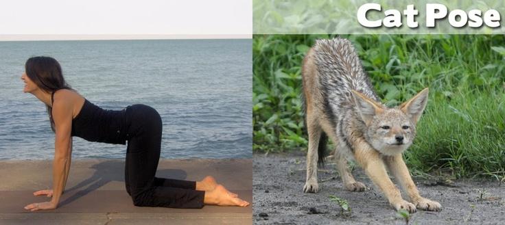 Animal Demonstrating Yoga Pose