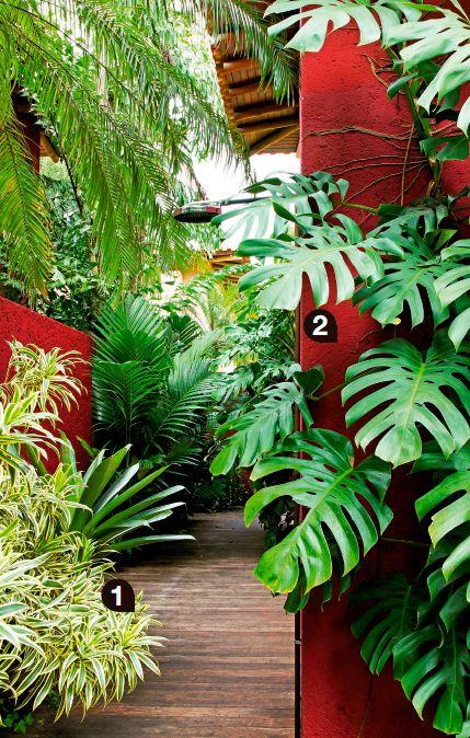 Vegetação farta em jardim de casa da praia - Casa