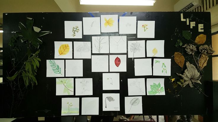 Natural Object Layout Display - Group A1