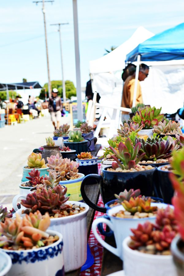 FIELD TRIP :: TREASURE ISLAND FLEA MARKET