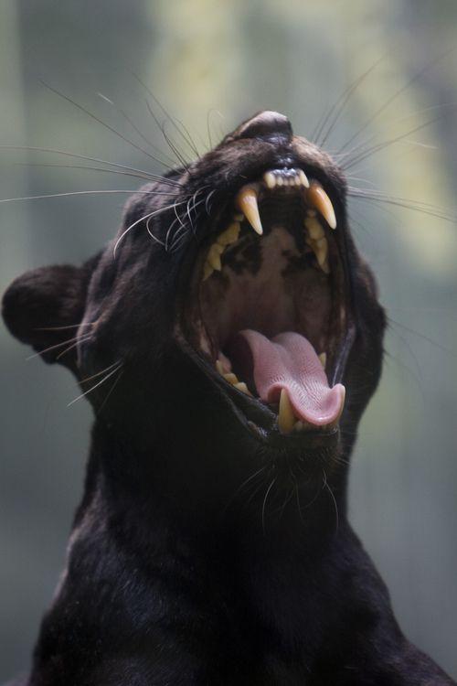 Image de cat, animal, and black