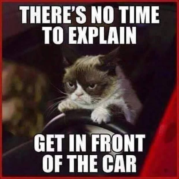 There's no time to explain! Get in front of the car. !! grumpy cat memes - Cat memes - kitty cat humor funny joke gato chat captions feline laugh photo #GrumpyCat