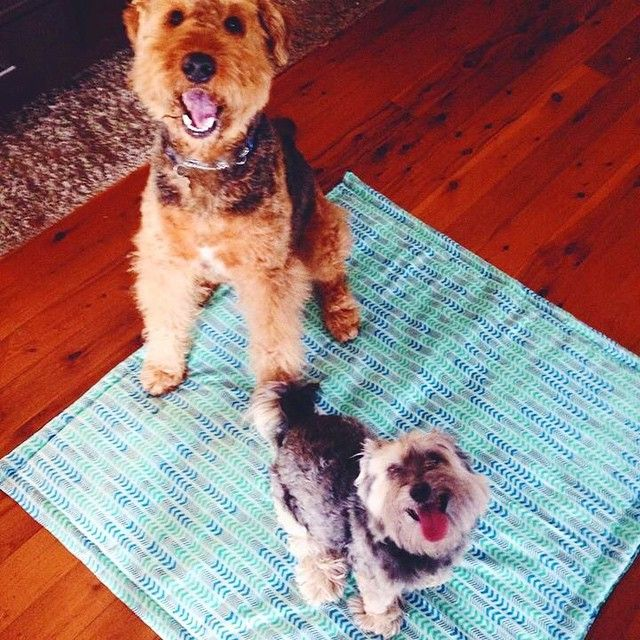 Here are two fur babies enjoying a padded, reversible mat to stay comfy on! LOVE this photo!