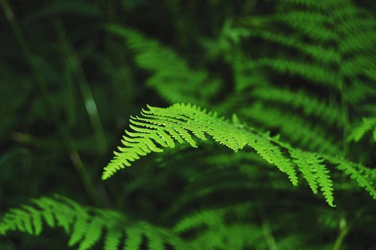 I uncovered this photo from way back when I bought a decent SLR camera :-) #earthpix  #ig_thisworld #pictures_environment #earthfocus #wonderfulworld#newcamera #photoexperiments #ferns #green #closeup #focus