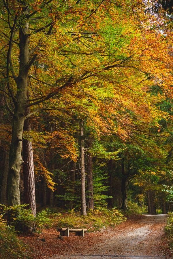 Autumn pathway (Switzerland) by Sven Lenz / 500px