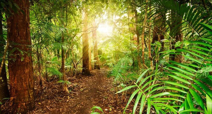Amazon rainforest deforestation linked to droughts, extreme ...