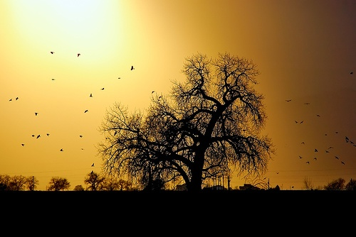 The Farmer's Tree of Life by Fort Photo, via FlickrInteresting Photos, Tremendous Trees, Trees Of Life, Photos Tags, Farmers Trees, Forts Photos, Tree Of Life