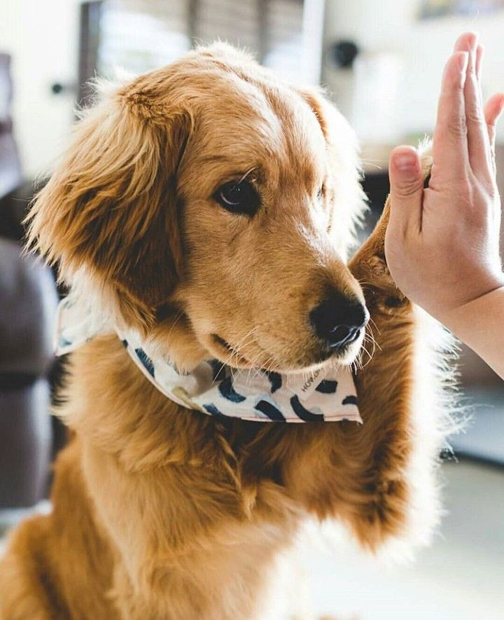 Polk-a-Dot Dog Bandana Food Dog Bandana Fun Dog Bandana Doughnnut Sprinkles Pet Bandana Handmade Dog Bandana