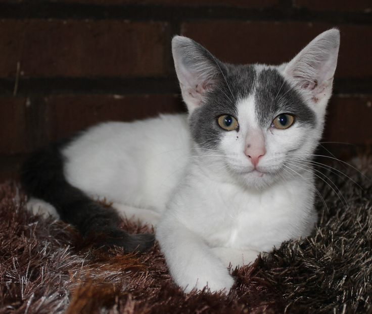 Silke, 13½ weeks old