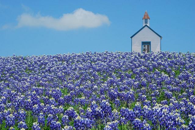 The little chapel on Bluebonnet Hill by Michael Fitzgerald (micfitz), via Flickr