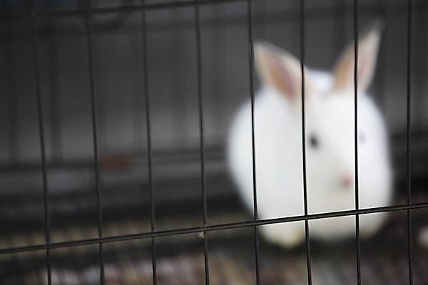 Rabbit in Malaysian market by   Roger Llabrés