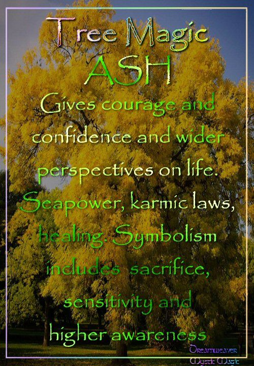 ASH  Gives courage and confidence and wider perspectives on life. Seapower, karmic laws, healing. Symbolism includes sacrifice, sensitivity and higher awareness