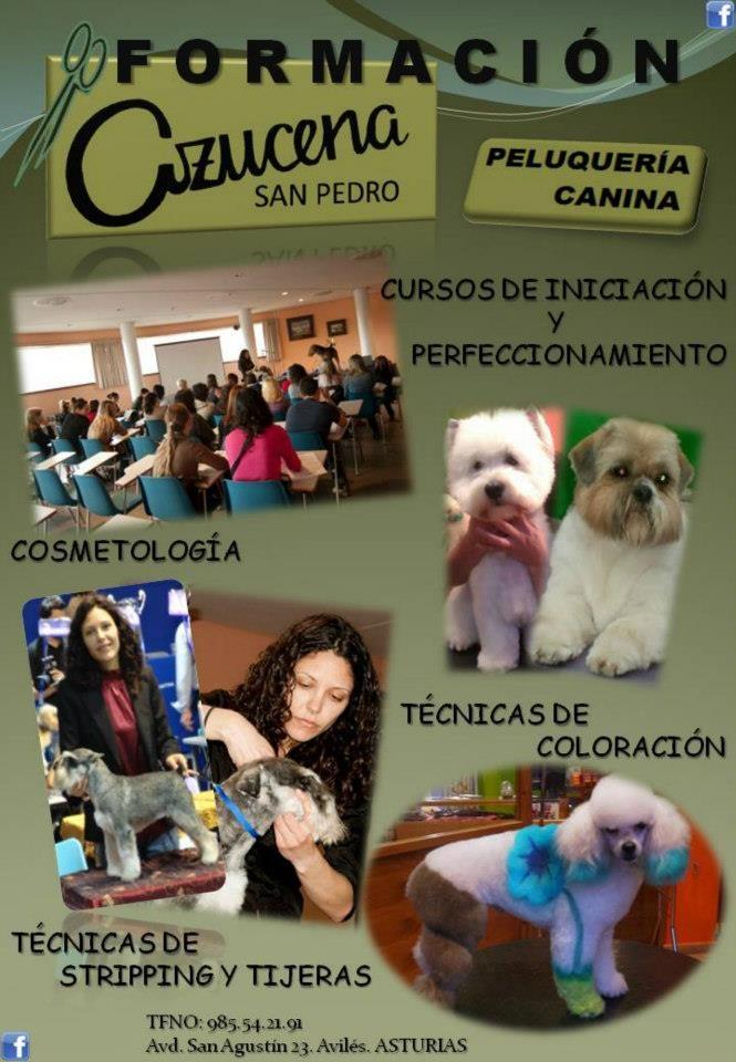 Grooming School Azucena San Pedro   Avilés - Asturias  985 542 191