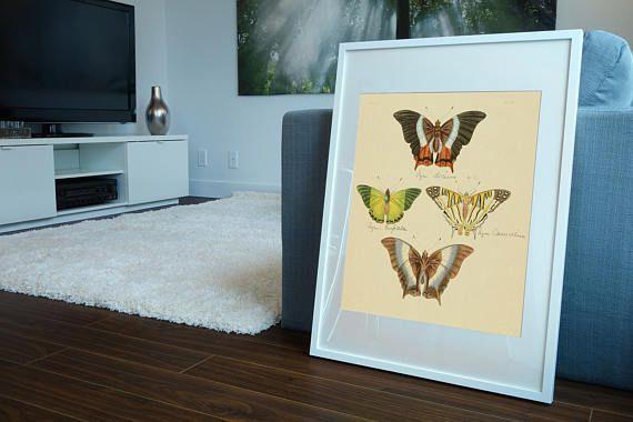 Butterflies Antique Print Butterfly Art Vintage Butterfly