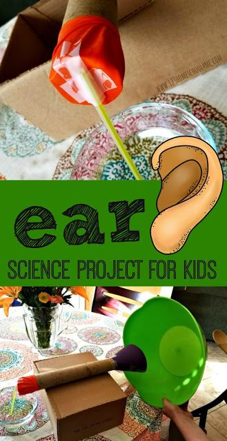 Ear Anatomy Science Project - This is such a fun, easy to make science project for kids to learn about the human body (homeschool, science fair, human body experiments, kindergarten, first grade, 2nd grade, 3rd grade,4th grade, 5th grade, 6th grade, 5 senses)