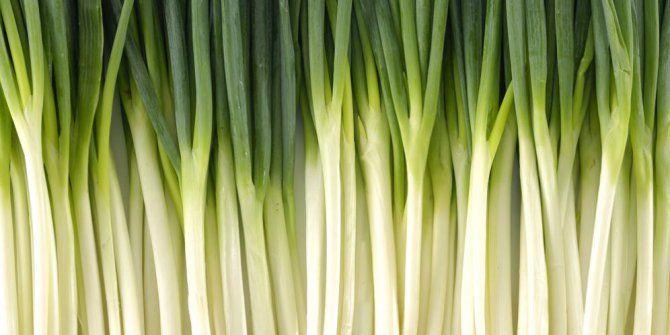 10 Manfaat Mengkonsumsi Daun Bawang untuk Kesehatan Tubuh - http://www.gaptekupdate.com/2014/02/10-manfaat-mengkonsumsi-daun-bawang-untuk-kesehatan-tubuh/
