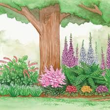 SHADE GARDEN (Deer Resistant): Specially selected plants that do not appeal to deer that will add bright color to a shady area. Zones 4-8. Partial to Full Shade. 15 prime-quality plants: *3 Mixed Foxglove, *1 Lady Fern, *1 King of Hearts Bleeding Heart, *3 Mixed Hardy Primrose, *1 Rheinland Astilbe, *6 Giant Lily of the Valley. ~ $80 springhillnursery.com.