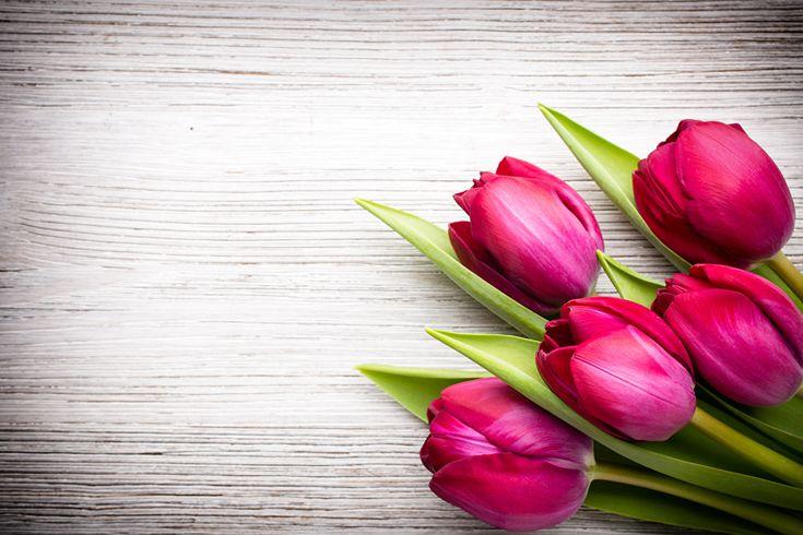 Картинка Бордовый Тюльпаны Цветы Шаблон поздравительной открытки Крупным планом Доски вблизи