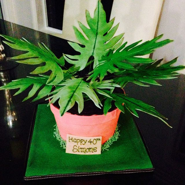 Philodendron Pot Plant Cake