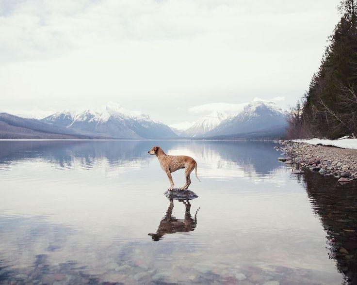 Ce photographe réalise un fabuleux projet avec son chien à travers les Etats-Unis...