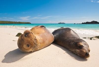 Zeeleeuwen op Galapagos