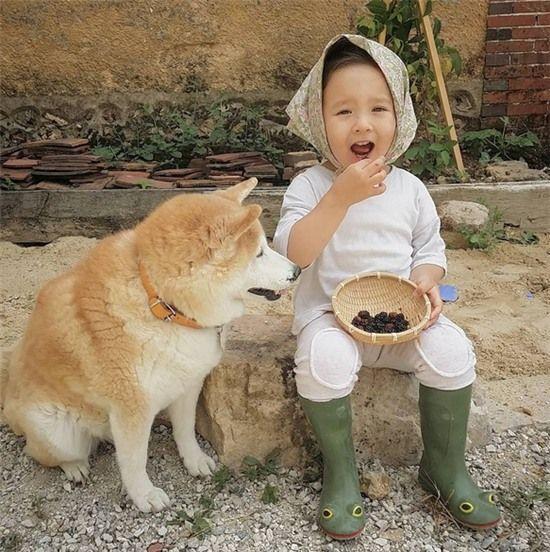 """""""Tan chảy"""" với tình bạn """"đáng yêu lạc lối"""" của em bé và chó Shiba"""