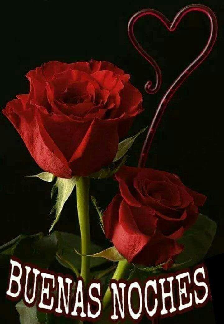 Pin De M Consuelo Serrano G En Hermoso Rosas Bonitas Rosas