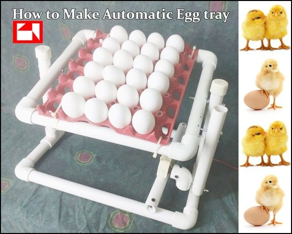 Incubator Tray for Hatching Chicken Eggs Project Homesteading  - The Homestead Survival .Com