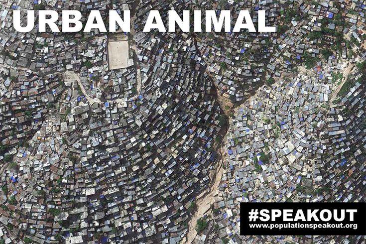 URBAN ANIMAL: HILLSIDE SLUM - Slum-dwelling residents of Port-au-Prince, Haiti (population 4 million, density 50,000/mile [129,500 km2]) face bleak living conditions in the Western Hemisphere's poorest country.