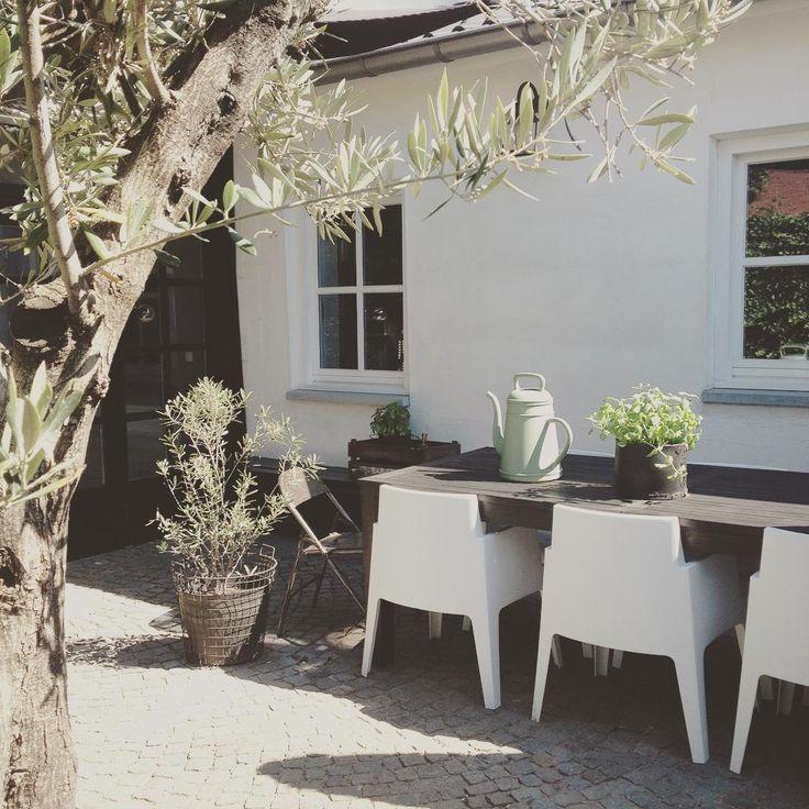 Ik kan zo genieten van de zon!!! Het is nu heerlijk buiten tuin#binnenplaats#olijfboom#thuis
