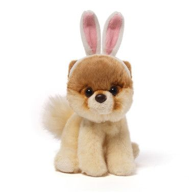 26 best boo the dog images on pinterest plush cutest dogs and gund itty bitty boo the worlds cutest dog with bunny ears plush negle Images