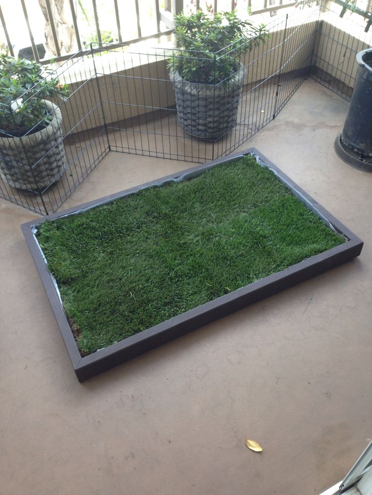 Beautiful Dog Grass Pad Filled With Real Dog Potty Grass. Get One At Www.  Doggyandthecity