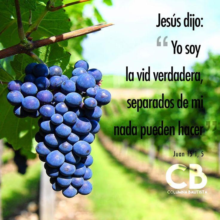 Ministerio Columna Bautista: ¿Qué significa: Jesús la vid verdadera?
