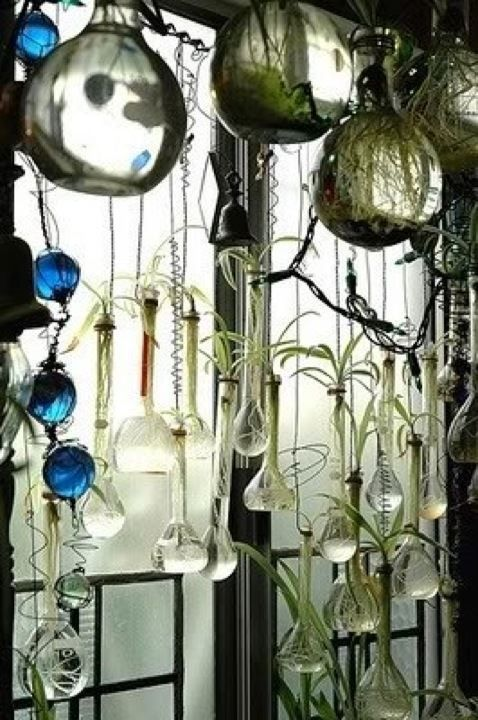 17 best images about air plants on pinterest champagne - How to hang plants in front of windows ...