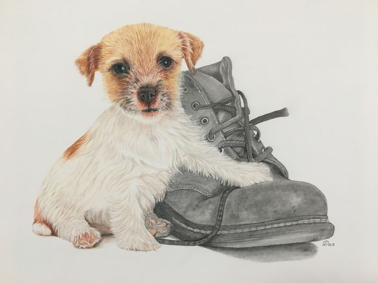 Jack Russel Puppy & Boot by Janine Lees Art (2018). Coloured Pencils and Graphite Portrait.