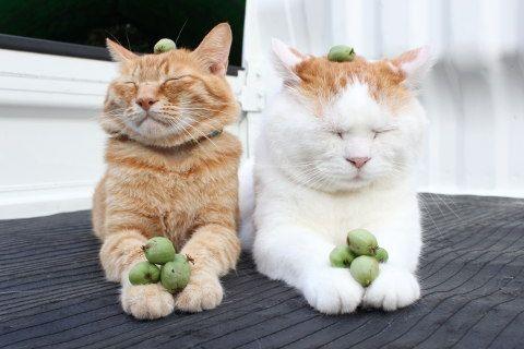 サルナシ | のせ猫オフィシャルブログ Powered by Ameba