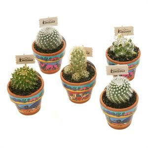 Mini Cactus Magnets--omg you can give your wedding guests mini cacti !