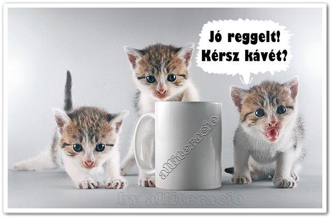 jó reggelt, kávé, cicák