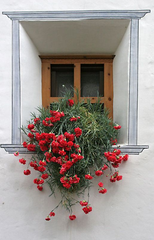 Little window with red carnation, Engadin, Switzerland