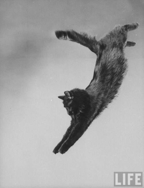 Portrait of Blackie, Gjon Mili's cat. Gjon Mili, New York, 1943.Source: LIFE Photo Archive, hosted by Google.