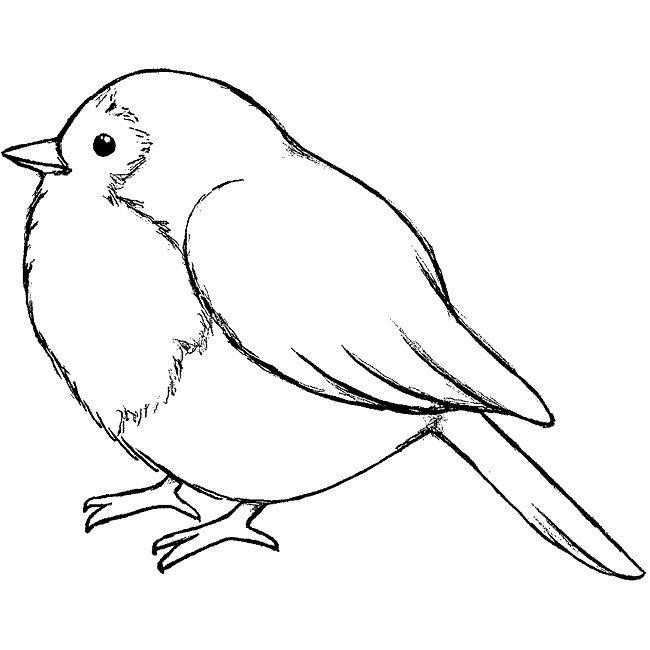 работы птица рисунок срисовать представителям кошачьей породы