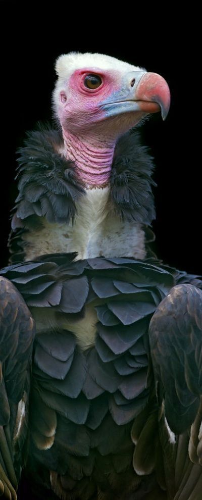 Vulture. Nature' flying cleaners.  They are not gorgeous birds of paradise, but they are necessary.