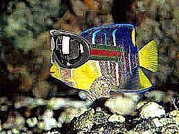 rare fish. please no questions.