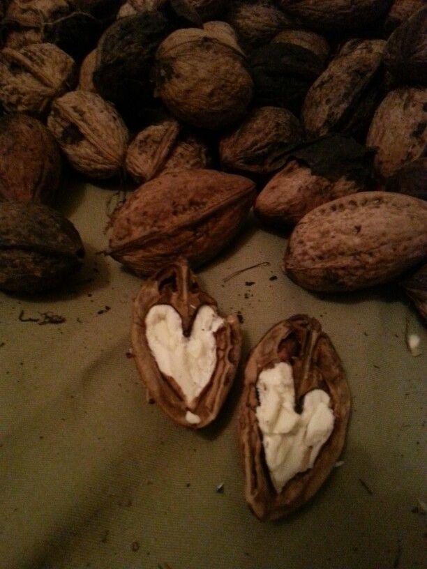 E. HASIOTIS Heart