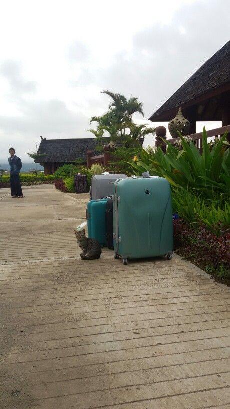 Ma chi guarda queste valigie? ? meno male che ci sono io! !