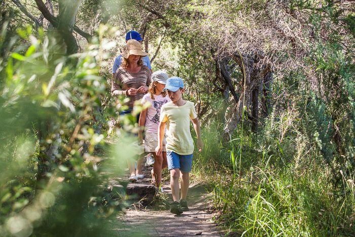 The Five Best Sydney Harbour Family Nature Walks