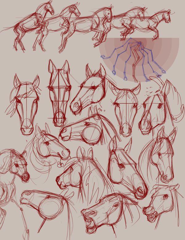 Horse sketches