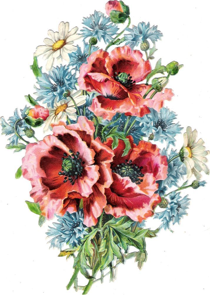 Oblaten Glanzbild scrap die cut chromo Blumen Strauß  26,5 cm poppy bouquet Mohn