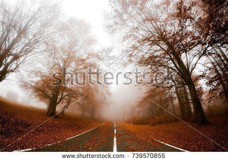 Autumn road in fog