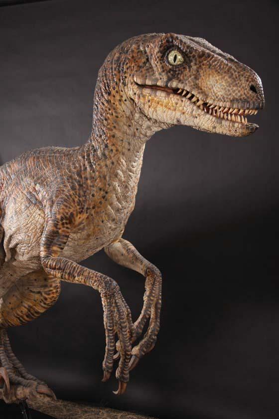 Velociraptor maquette, Jurassic Park